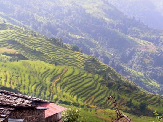 terraces-gurung-1